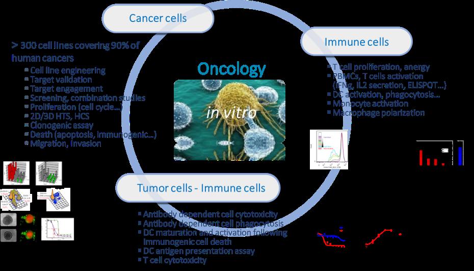 SOLO-Oncologie In vitro