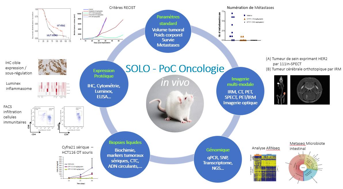 SOLO-Oncologie In vivo2 - FR
