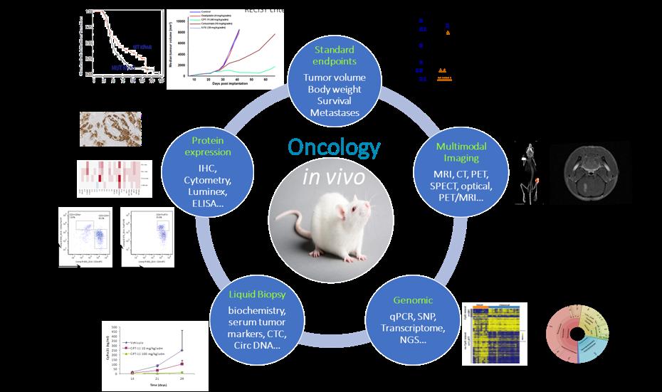 SOLO-Oncologie In vivo2