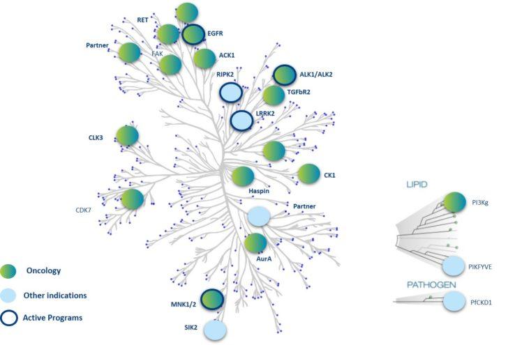 inhibiteurs-de-kinases-EN