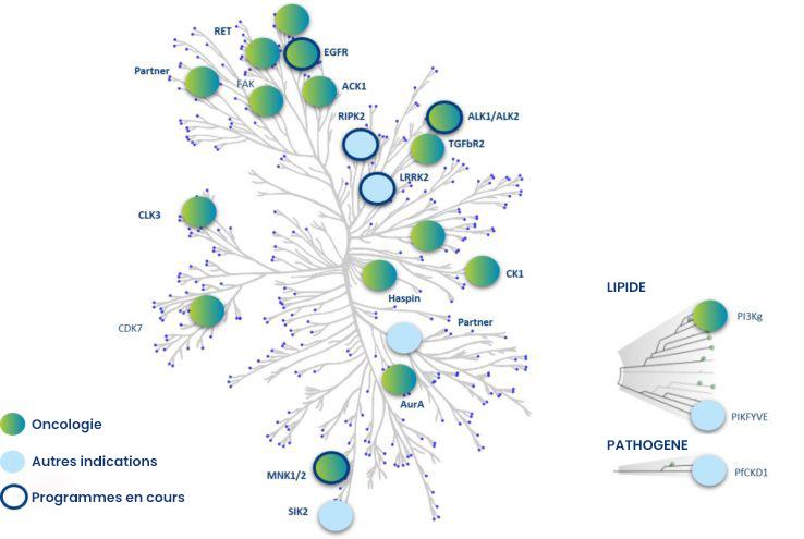 inhibiteurs-de-kinases-FR