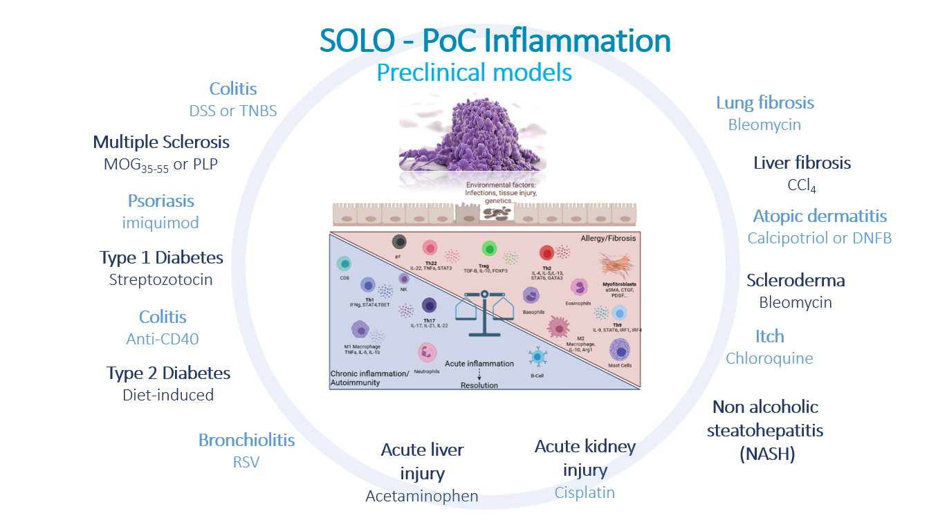 Inflammation and preclinical models2