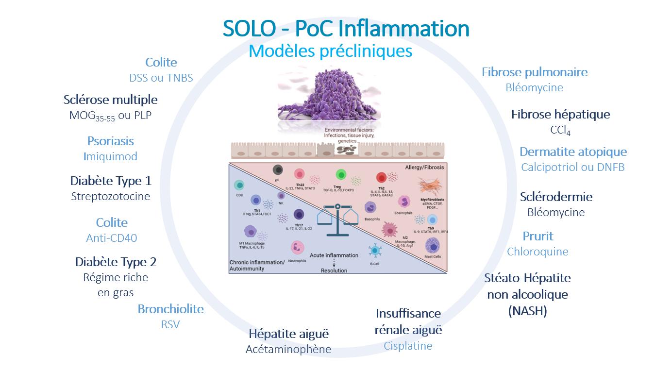 Inflammation et modèles précliniques2